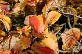 Autumn Colours in WestonBirt